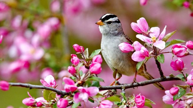 spring flowers and birds